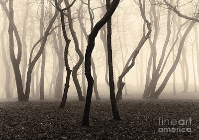 Photograph - Trees And Fog No. 1 by David Gordon