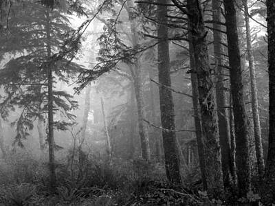 Photograph - Trees And Fog by Tarey Potter