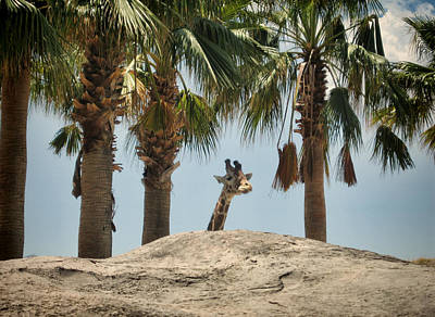 Photograph - Trees And Giraffe by Dorothy Cunningham
