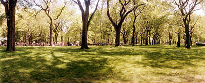 Trees And Grass In A Central Park Art Print
