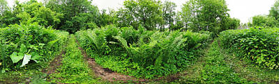 Richelieu Photograph - Trees And Plants In A Forest by Panoramic Images