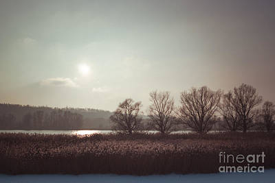 Photograph - Trees And Reed I. by Alexander Kunz