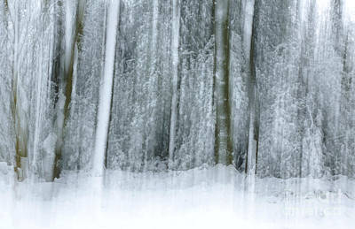 Photograph - Trees And Snow Abstract by David Birchall