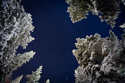 Cold Temperature Photograph - Trees And Stars, Cold Temperatures by Panoramic Images