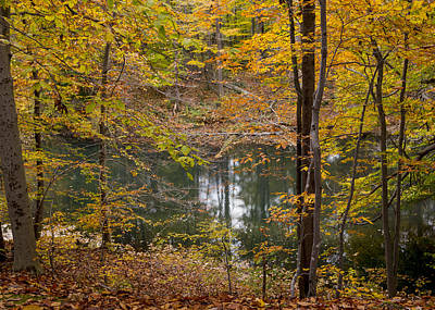 Trees And Water  Art Print by Tim Fitzwater