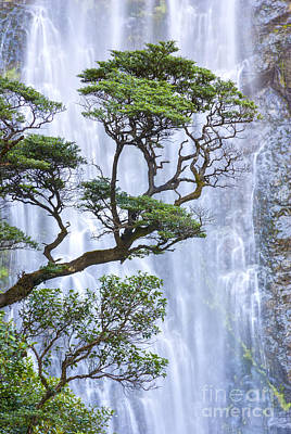 New Zealand Photograph - Trees And Waterfall by Colin and Linda McKie