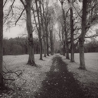 Appleton Photograph - Trees At Appleton by David Stone