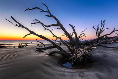 Trees At Driftwood Beach Art Print by Debra and Dave Vanderlaan