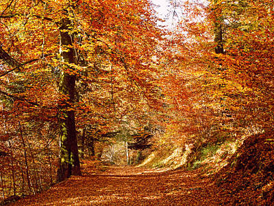 Fallen Leaf Photograph - Trees At Huelgoat Forest In Autumn by Panoramic Images