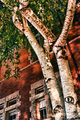Brick Building Photograph - Trees At Night by HD Connelly