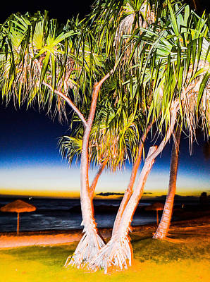Photograph - Trees At Night by Lisa Cortez