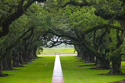 Photograph - Trees At Oak Alley Plantation by Denise Mazzocco