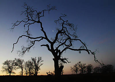 Photograph - Trees At Sunrise by Robert Woodward