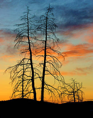 Photograph - Trees At Sunset In Bryce Canyon by Daniel Woodrum