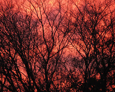 Photograph - Trees At Sunset by Laurel Powell