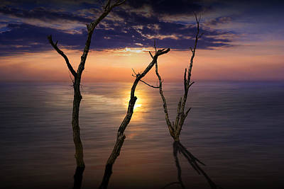 Photograph - Trees At Sunset by Randall Nyhof