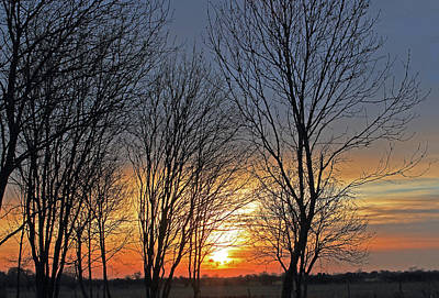 Photograph - Trees At Sunset by Tony Murtagh