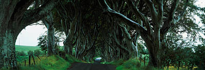 County Antrim Photograph - Trees At The Dark Hedges, Armoy, County by Panoramic Images