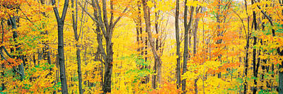 Quebec Photograph - Trees Autumn Quebec Canada by Panoramic Images