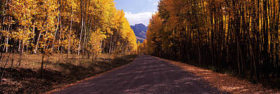Dirt Roads Photograph - Trees Both Sides Of A Dirt Road by Panoramic Images