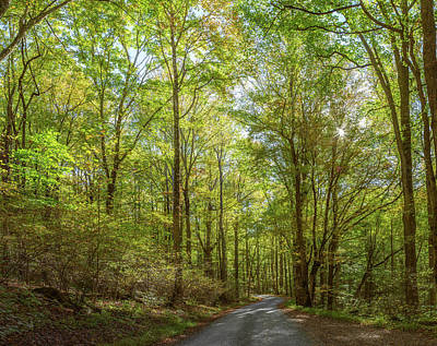 Dirt Roads Photograph - Trees Both Sides On A Dirt Road by Panoramic Images