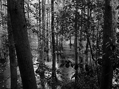 Photograph - Trees Bw by Nelson Watkins