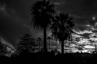 Digital Art - Trees By Moonlight by Photographic Art by Russel Ray Photos