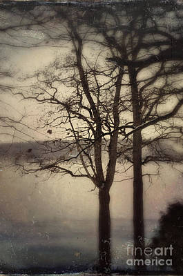 Photograph - Trees By The Lake by Jill Battaglia
