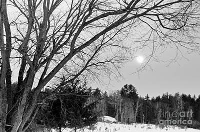 State Love Nancy Ingersoll - Trees by Cheryl Baxter