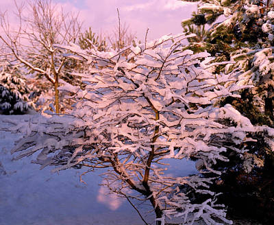 Trees Covered In Snow Art Print by Maurice Nimmo/science Photo Library