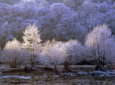 Hoar Frost Photograph - Trees Covered With Hoar Frost by Simon Fraser/science Photo Library