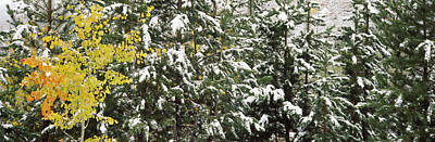 Fir Trees Photograph - Trees Covered With Snow, Grand Teton by Panoramic Images