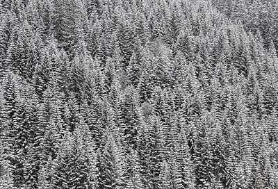 Photograph - Trees Covered With Snow by Matthias Hauser