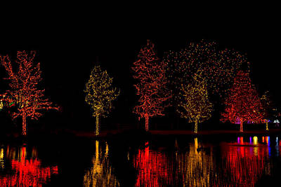 Ballerina Art - Trees Decorated with Yellow and Red Christmas Lights by John Bielick