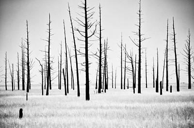 B Photograph - Trees Die Off by Louis Dallara