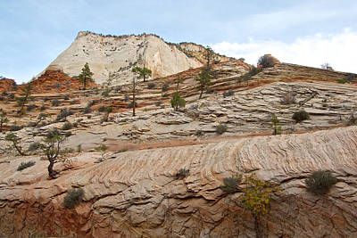 Trees Growing Out Of Rock Along Zion-mount Carmel Highway In Zion Np-ut Art Print by Ruth Hager
