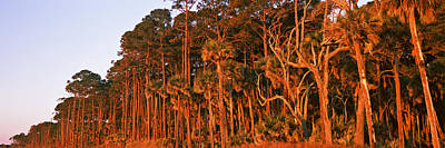 Trees, Hunting Island State Park Art Print by Panoramic Images