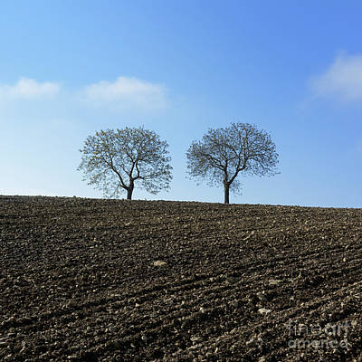 Bare Trees Photograph - Trees In A Agricultural Landscape. by Bernard Jaubert