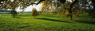 Pear Tree Photograph - Trees In A Field, Aargau, Switzerland by Panoramic Images