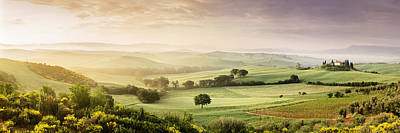 Trees In A Field, Villa Belvedere, San Print by Panoramic Images