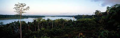 Amazon Rainforest Photograph - Trees In A Forest, Amazon Rainforest by Panoramic Images