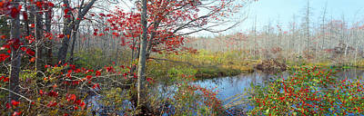 Maine Nature Photograph - Trees In A Forest, Damariscotta by Panoramic Images