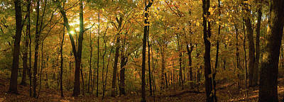 Trees In A Forest, Delnor Woods Park Art Print by Panoramic Images