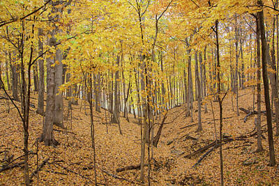 Trees In A Forest During Autumn Art Print by Panoramic Images