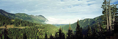 Trees In A Forest, Hurricane Ridge Art Print