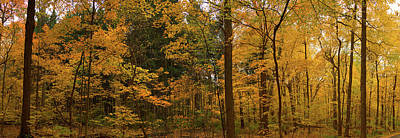 Trees In A Forest, Morton Arboretum Art Print by Panoramic Images