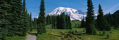 Trees In A Forest, Mt Rainier National Print by Panoramic Images