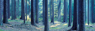 Bohemia Photograph - Trees In A Forest, South Bohemia, Czech by Panoramic Images