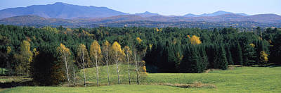 Bare Trees Photograph - Trees In A Forest, Stowe, Lamoille by Panoramic Images