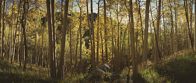 Fallen Leaf Photograph - Trees In A Forest, Uncompahque National by Panoramic Images